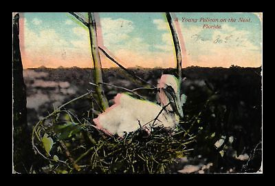 Dr Jim Stamps Us Young Pelican On Nest Florida Topical View Postcard