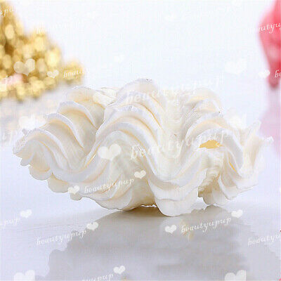 13-14cm Natural Marine Sea Shell Tridacna Clam Conch Home Furnishing Giant Large