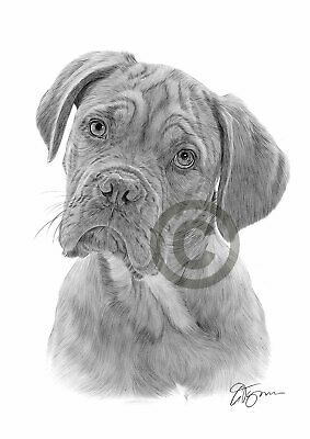DOGUE DE BORDEAUX art print pencil drawing A4 only signed by artist Dog