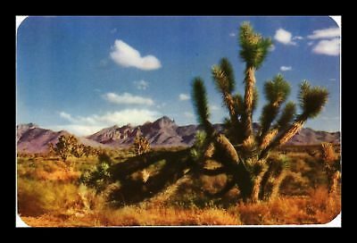 Dr Jim Stamps Us Joshua Tree On The Desert Chrome View Kodachrome Postcard