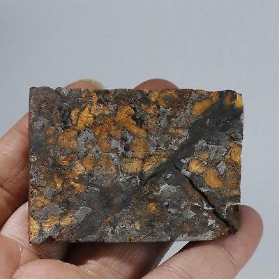 119g Rare slices of Kenyan Pallasite  olive meteorite A714