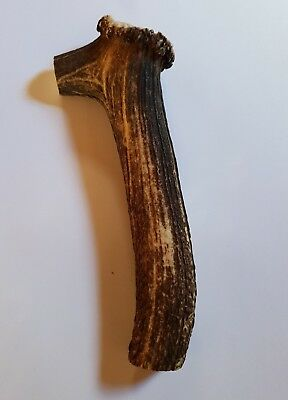ROLL with CORONET HANDLE Red Deer STAG ANTLER for Walking Hiking Stick Making #2
