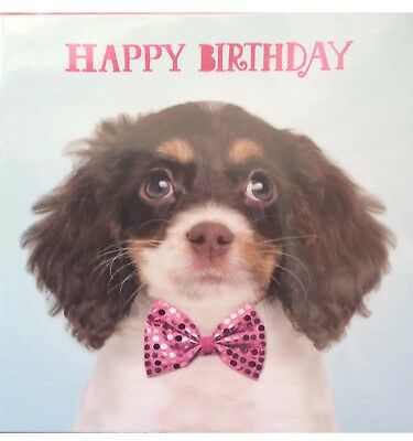 Funny Animal Birthday Cards By Pet Pawtraits And Crazy Gang 5x 5