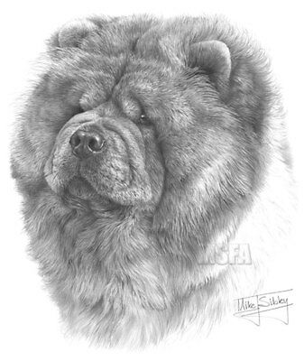 Chow Chow Large Superb Quality Giclee Print by Mike Sibley, Collectable