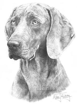 Weimaraner Large Superb Quality Giclee Print by Mike Sibley, Collectable