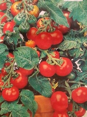 Tomate Cerise Red Cherry 400 semillas  seeds -  Cereza Rojo