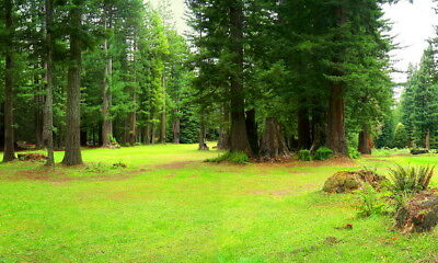Redwood Paradise Northern California!   In Willits, Mendocino County