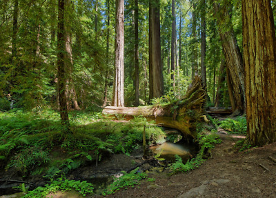 Build you weekend Paradise   In Willits, Mendocino County