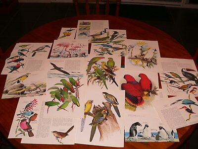 18pc bird ephemera cut outs pages, altered art mixed media decoupage journal PK4