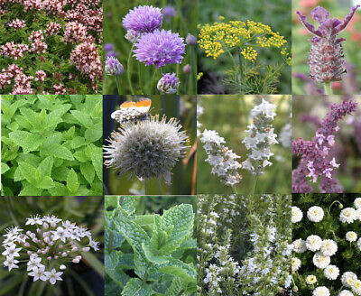 Pick & Mix herb plants. Amazing selection * Fantastic Value *