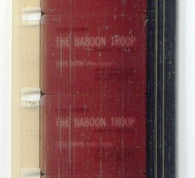 The Baboon Troop 1970 16mm short film documentary