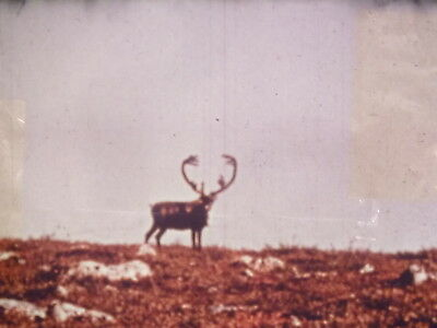 At The Caribou Crossing Place Part 2 1969 16mm short film
