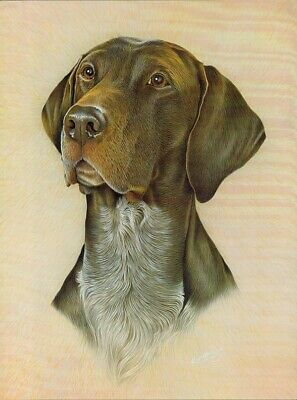 Print of a German Shorthaired Pointer by Ken Messom, Collectable