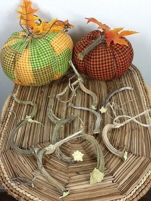 """Pumpkin Stems 10 Excellent Quality Naturally Dried 3"""" - 4"""" Stems Lots Of Curlies"""
