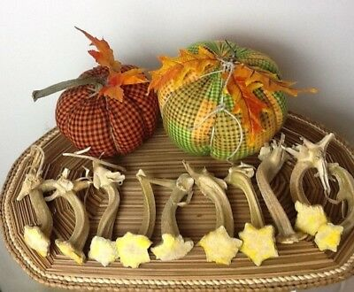 """Pumpkin Stems 10 Excellent Quality Naturally Dried Stems  3.5"""" - 4"""" With Curlies"""
