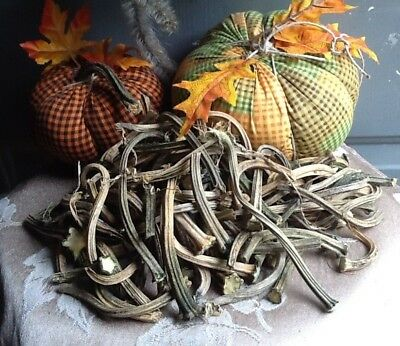 """Pumpkin Stems 100 Excellent Quality Naturally Dried Stems  2.5"""" - 5"""""""