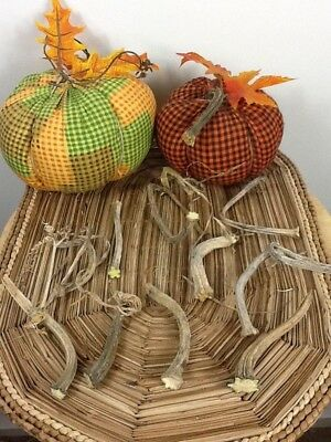 """Pumpkin Stems 10 Excellent Quality Naturally Dried 3""""-4.5"""" Stems Lots Of Curlies"""