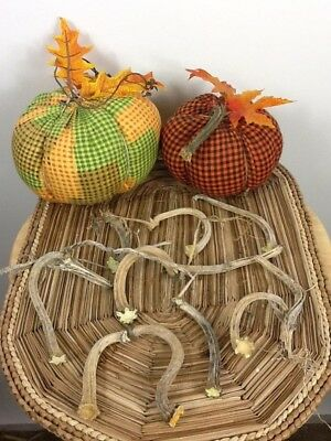 Pumpkin Stems 10 Excellent Quality Naturally Dried 3.5 Stems Lots Of Curlies