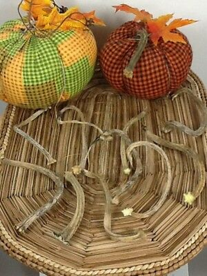 """Pumpkin Stems 10 Excellent Quality Naturally Dried 5- 5.5"""" Stems Lots Of Curlies"""