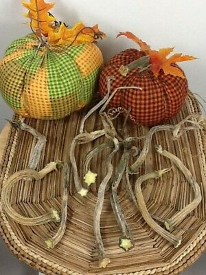 """Pumpkin Stems 10 Excellent Quality Naturally Dried 4.5- 6"""" Stems Lots Of Curlies"""