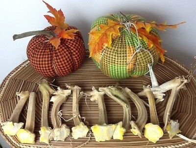 """Pumpkin Stems 10 Excellent Quality Naturally Dried Stems  4"""""""