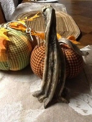 """Pumpkin Stem One Large Excellent Quality Naturally Dried 8.5"""" Stem"""