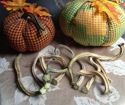 """Pumpkin Stems 10 Excellent Quality Naturally Dried Stems  3"""" - 4.5"""""""