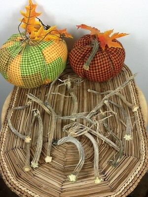 """Pumpkin Stems 10 Excellent Quality Naturally Dried 3.5- 5"""" Stems Lots Of Curlies"""