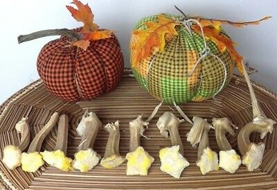 """Pumpkin Stems 10 Excellent Quality Naturally Dried Stems  2.5"""" - 3.5"""""""