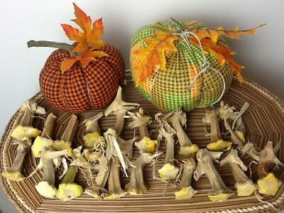 """Pumpkin Stems 20 Excellent Quality Naturally Dried Stems  2"""" - 2.5"""""""