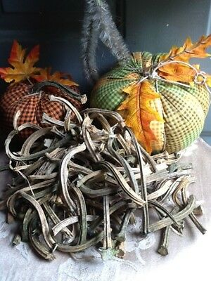 """Pumpkin Stems 100 Excellent Quality Naturally Dried Stems  3"""" - 5"""""""