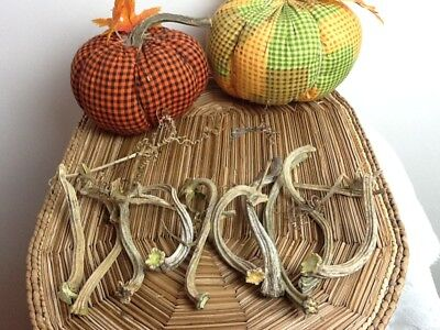 """Pumpkin Stems 10 Small  Excellent Quality Naturally Dried 4"""" - 5"""" Stems"""