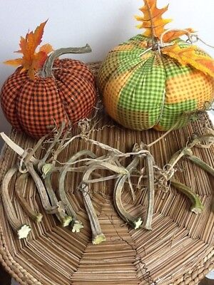 """Pumpkin Stems 10 Small  Excellent Quality Naturally Dried 3.5"""" - 5"""" Stems"""