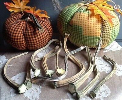"""Pumpkin Stems 10 Excellent Quality Naturally Dried Stems  4"""" - 5"""""""