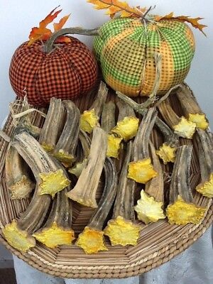 """Pumpkin Stems 20 Large Excellent Quality Naturally Dried 4.5"""" - 6.5"""" Stems"""