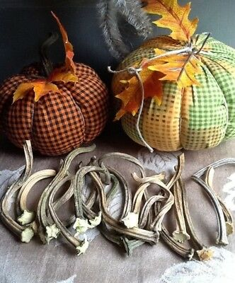 """Pumpkin Stems 20 Excellent Quality Naturally Dried Stems  """"3 - 5"""""""