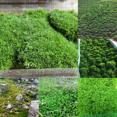 Natural Microlandscape Moss Aquatic Green Live Plants Aquarium Fish Tank Decor