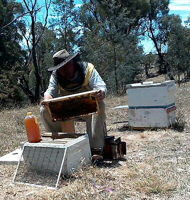 pure unfiltered RAW HONEY 100% product of australia
