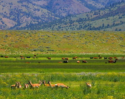 1.4 acres Ranch  WILDERNESS  QUALITY OF LIFE MODOC COUNTY