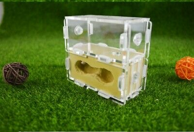 Natural Plaster Ant Farm Housing Ant Nests Formicarium For Ant Colony + Choices