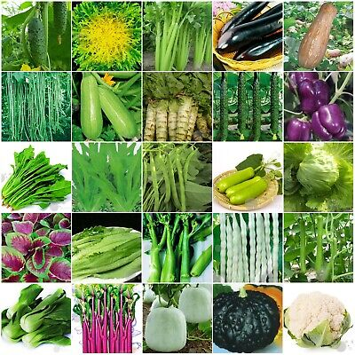 150+ varieties China vegetable Seeds retail package with name picture 原装彩包蔬菜种子籽