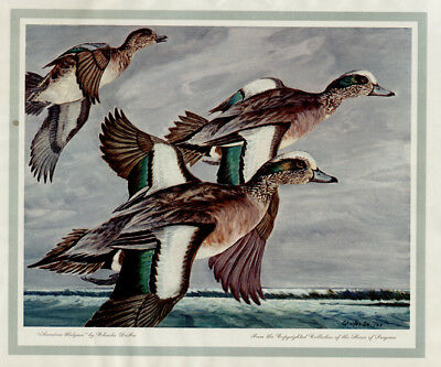 "CHARLES DEFEO - AMERICAN WIDGEON -  Hunting Duck Print 11x14"" Exc Condition"
