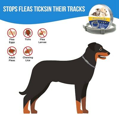 Flea and Tick Collar for Dog Cat Protection Tick Collar In Vitro Control of Lice