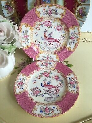 Minton Pink Cockatrice Side Plate 16cm  2 In Total