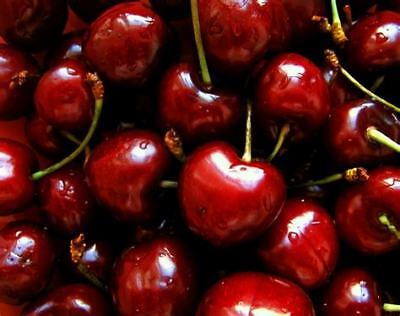 RARE Live Plant PENAJOIA CHERRY 3 cuttings  PRE-ORDER Receive in SEPTEMBER
