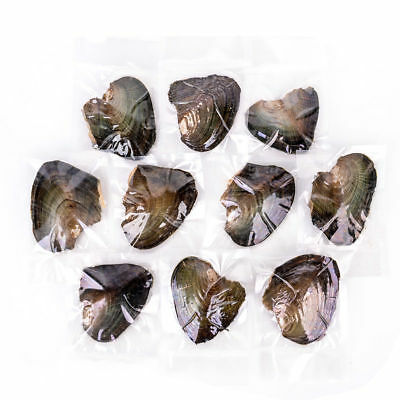 1- 20pcs Akoya Pearl Oysters With Real Pearl 7-8mm Freshwater Vacuum Packaging