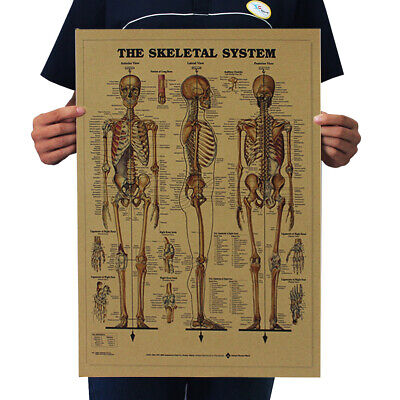 Retro Vintage The Skeletal System Body Structure Paper Poster Home Bar Decor