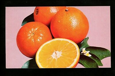 Food Related postcard Florida Navel Oranges