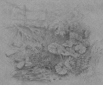 Thomas J. Marple, Winster Floral Landscape - 19th-century graphite drawing