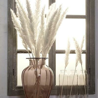 Dried Reed Blady Flower Grass Stem - Natural